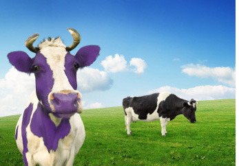purple cow going indie.7 resized 600